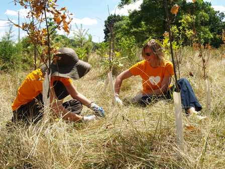 Volunteers at Van Cortlandt Park, Bronx