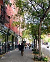 Tree lined sidewalk with store fronts