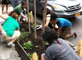 Mini-Grant recipients planting in a tree bed